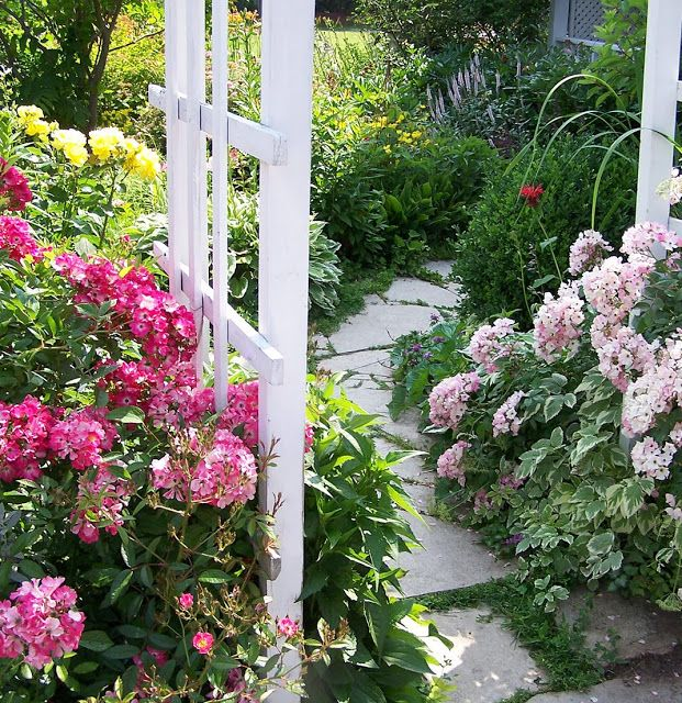 """""""Marjorie Fair"""" rose on the left and a """"Ballerina"""" rose on the right"""