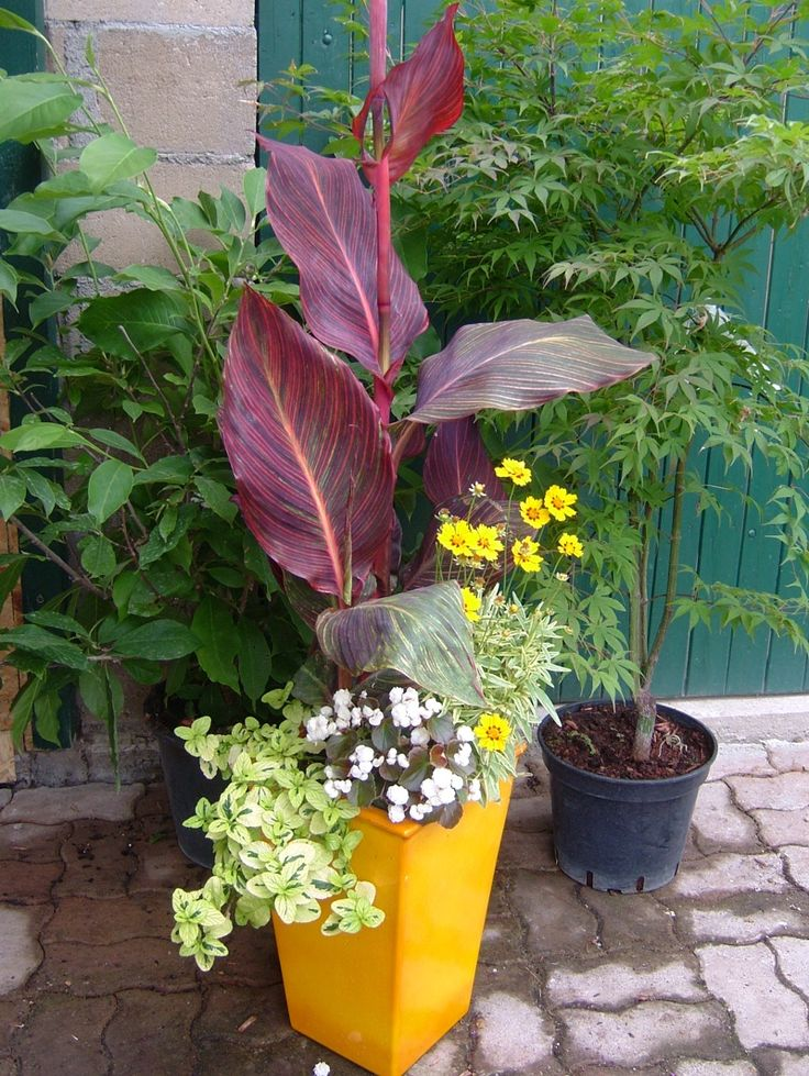 Tropicanna canna with mixed annuals in simple container for 38 garden design ideas