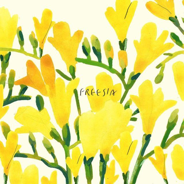 오늘은 입춘. 당신의 시작을 응원한다는 이 꽃말때문인지 해마다 2월이면 졸업식때 받은 프리지아 향기가 집안에 가득했다. 모두의 시작을 응원하는 마음으로 오늘은 #당신의시작을응원합니다