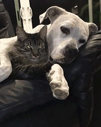 "paylasimlarkomik: ""Love for cat and dog :) """