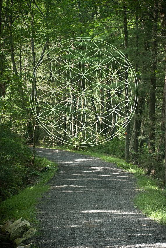 Sacred Geometry & Nature