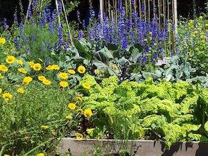 Potager fleuri : associer des légumes assez décoratifs (tomates rouges et jaunes, artichaut, salades colorées, haricots et pois grimpants, fraises, rhubarbe,...) avec des fleurs qui peuvent les aider (mellifères pour attirer les pollinisateurs, capucines et lavande pour éloigner les pucerons, souci qui réunit ces deux qualités,...)