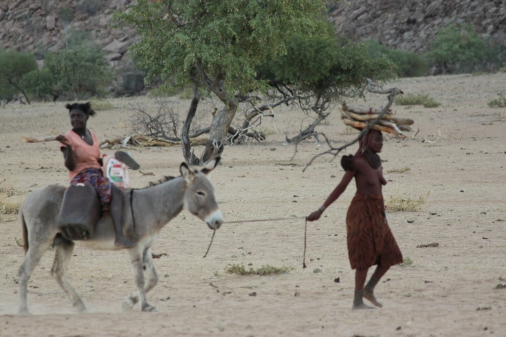 Traditional transport in #Namibia.