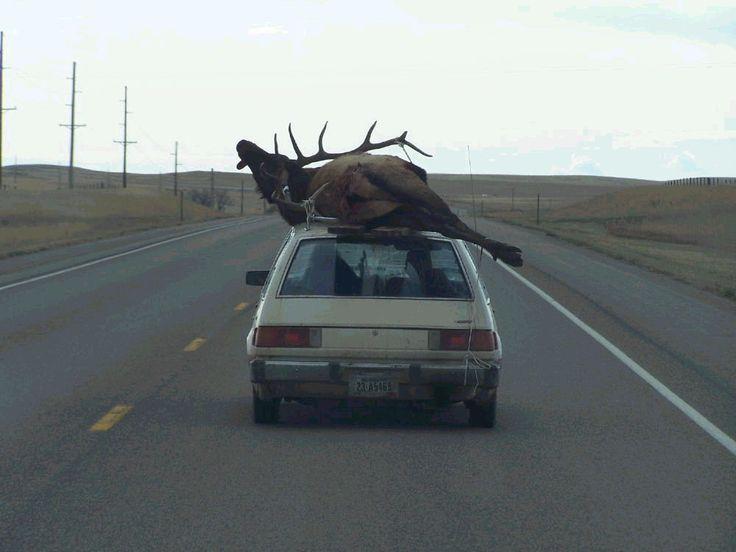 redneck - hahahahaha!!!!!: Hillbilly Hunt'S, Hunt'S Seasons, Ya Gotta, Funny, Rednecks Elk, Elk Hunt'S, Rednecks National, Deer, Rednecks Humor