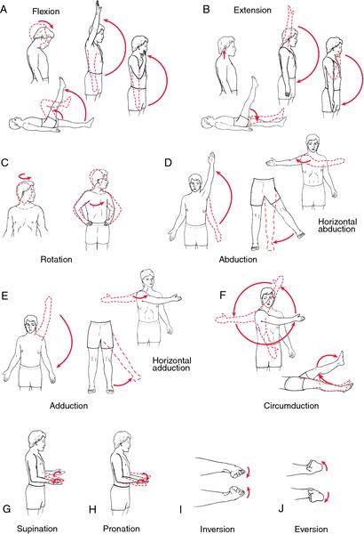 Diccionario.Estos ejercicios están incluidos en los Movimientos de Pawanmuktasana la Serie de los Vientos.