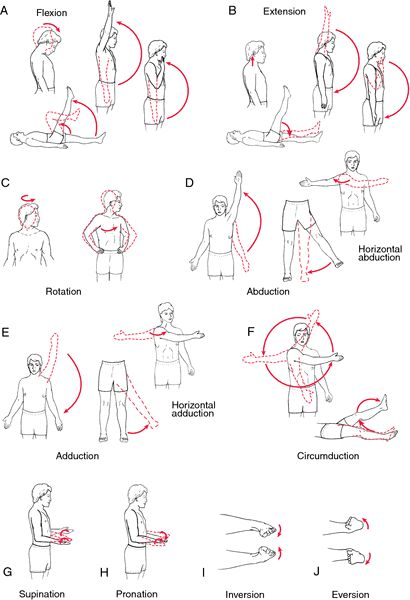 pictures of exercises for stroke patients | range of motion exercise - definition of range of motion exercise in ...