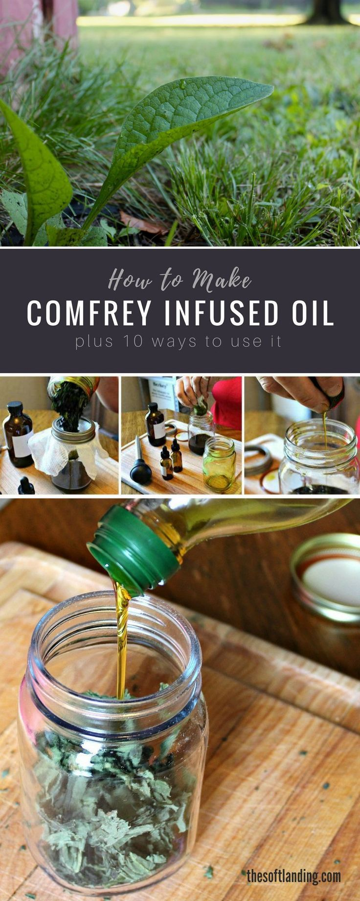 How to Make Comfrey Infused Oil + 10 Effective Ways to Use It via @thesoftlanding