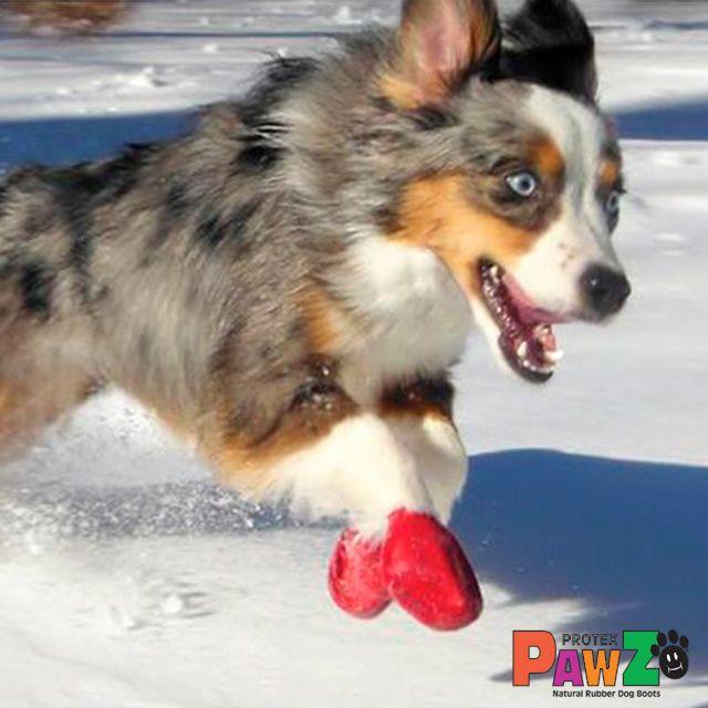NOVEDAD IMPRESCINCIBLE PARA LA NIEVE!!!!!! Las botas protectoras para perros PAWZ están fabricadas con caucho natural. Diseñadas para colocarlas con facilidad sin velcros ni cremalleras.100% biodegradables, impermeables, reutilizables, desechables y ecológicas. Ya a la venta en nuestra tienda online para mascotas!