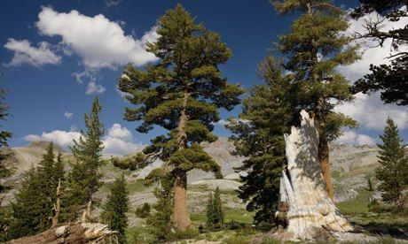 Trees accelerate growth as they get older and bigger, study finds