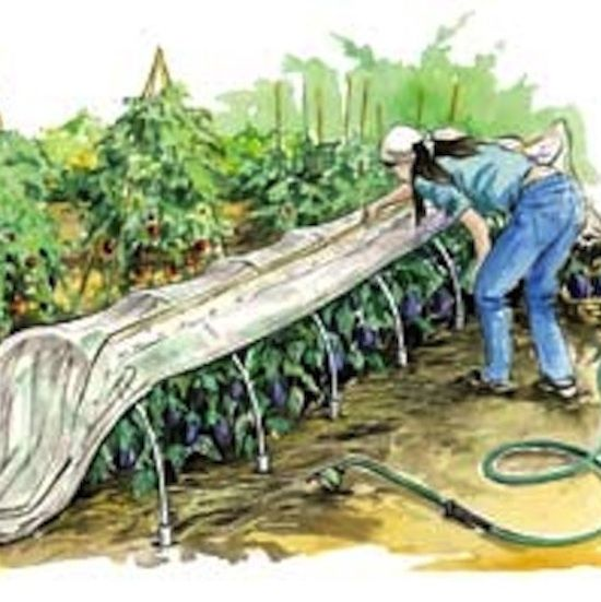 1000 images about Gardening Hoop Covers on Pinterest