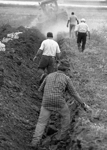 Terra: Il faticoso lavoro nei campi.