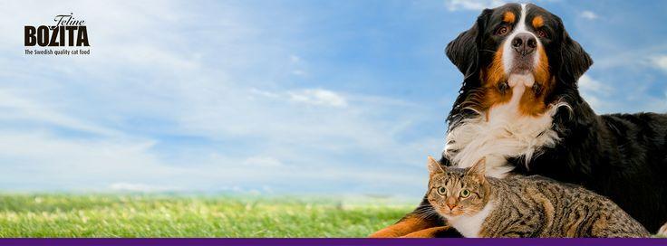 Швеция ассоциируется у большинства из нас с дизайнерами в стильных очках, мебельными конструкторами Икея и безопасными до безобразия автомобилями Volvo. Однако в стране высококлассных хоккеистов и длинноногих блондинок весьма трепетно относятся к братьям нашим меньшим. Так, шведы сумели не ударить в грязь лицом и создать один из лучших натуральных кормов для кошек и собак под брендом Bozita.   У него есть уникальная история появления, о которой представители компании охотно рассказывают при…