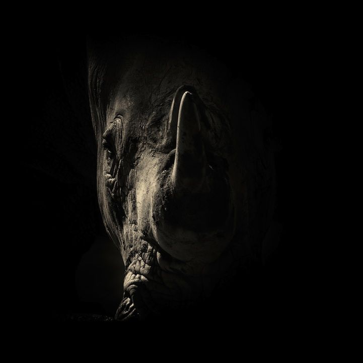 Best Photography Images On Pinterest Photography Black And - Powerful and intimate black white animal portraits by luke holas