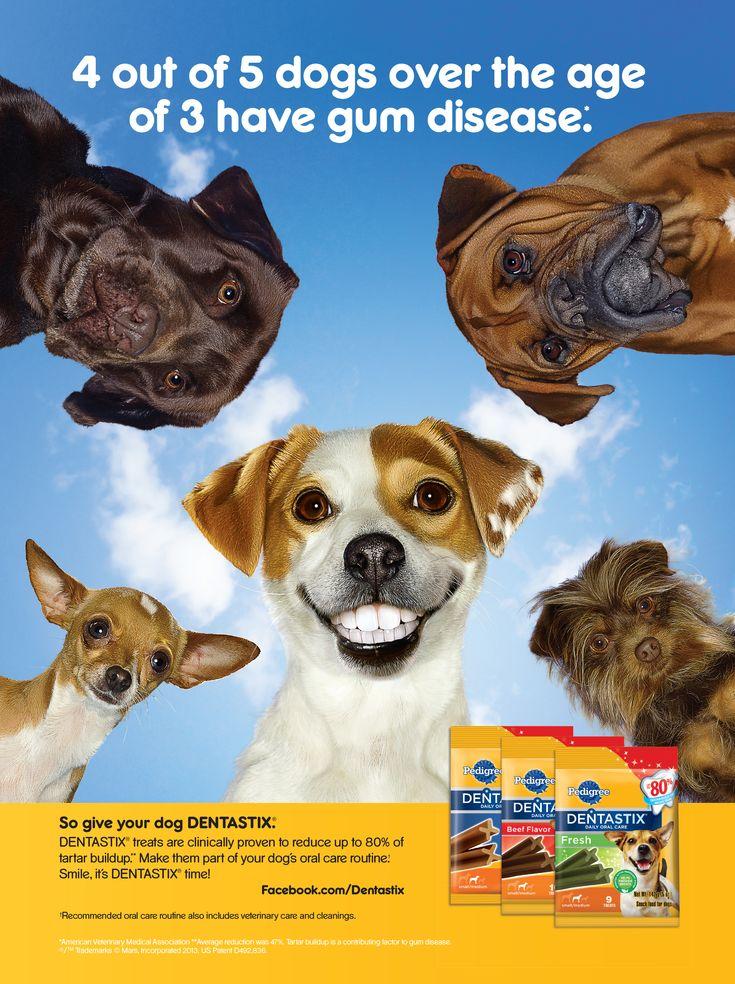 Pedigree Dog Commercial : pedigree, commercial, Thanks, Petcare, (makers, Pedigree), Sponsoring, Nashville, Magazine, Their, Mars.com, Teeth,, Care,