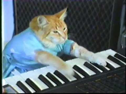 Funny Birthday Song (MewMew the Kitty) - YouTube