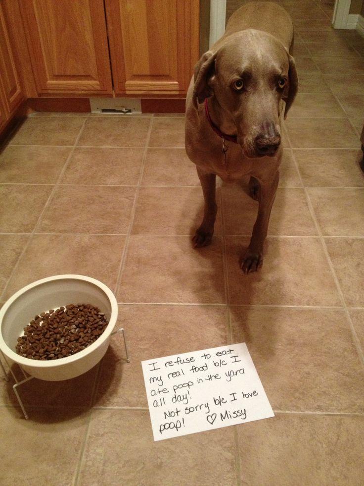 I refuse to eat my real food b/c I ate poop in the yard