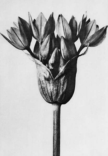 The Botanical Anthology of KARL BLOSSFELDT (1865-1932)
