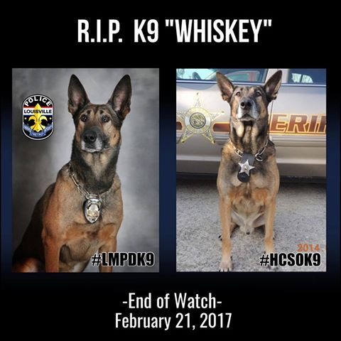 """Retired K9 """"Whiskey"""" was humanely euthanized on Tuesday, February 21st after suffering complications from an ongoing battle with heart disease. K9 Whiskey began his career with LMPD in 2007, and was partnered with Officer Tim Snook for two years before being retired early from patrol work . K9 Whiskey finished his career partnered with Officer Lou Corner, as a single purpose narcotics dog, before being fully retired from service in 2013. Thank you for your service K9 Whiskey."""