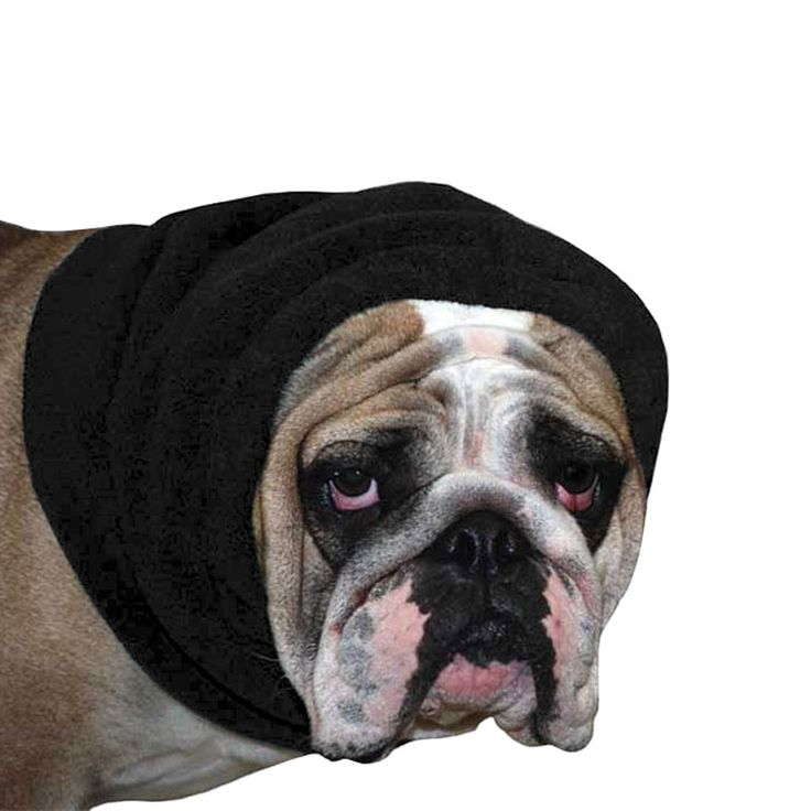 Black English Bulldog Dog Hood, great for warmth and laying with our dog rain coat. High performance material. Made in the USA.