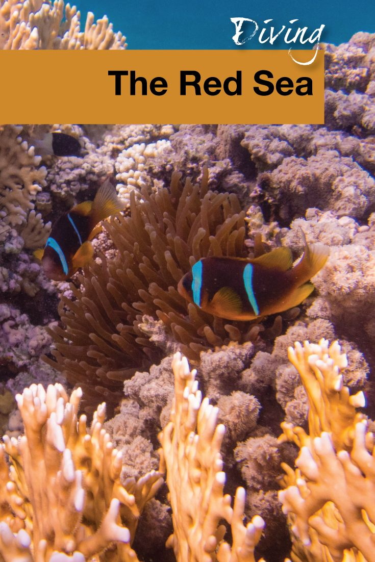 Join the WanderingWagars on another diving adventure! In this post we talk about shore diving the Red Sea from the port city of Aqaba.