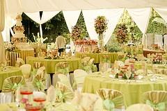 : Decor, Celery Colors, Receptions Linens, Colors Receptions, Photo, Outdoor Weddings