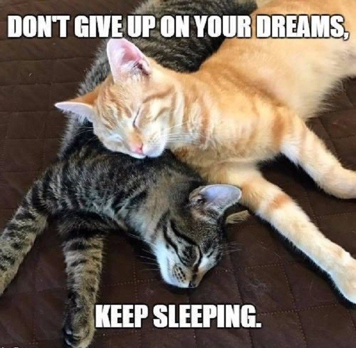 30 More Hilarious Cat Memes to Make You Smile in 2021 | Cat memes, Cat and  dog memes, Cats and kittens