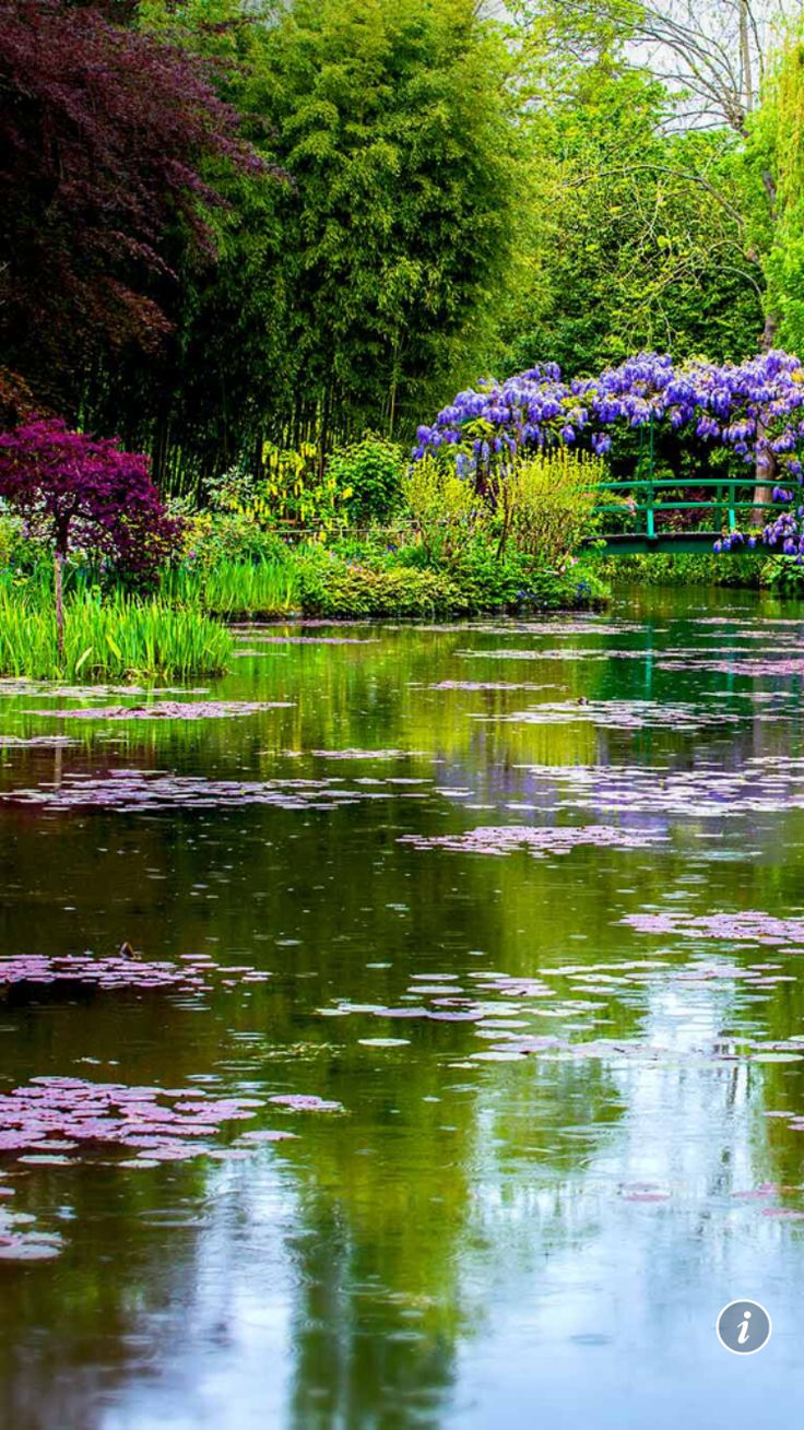 73 Pond Images Let You Dream Of A Beautiful Garden: 76 Best Pretty Bing Backgrounds Images On Pinterest