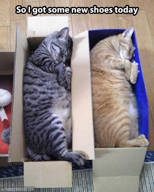 cats love their boxes