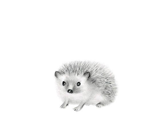 Woodland pépinière Art, hérisson, dessin au crayon, croquis animaux, Baby Art animalier, Kids oeuvre, pépinière Decor, Baby Art, decoration murale grise