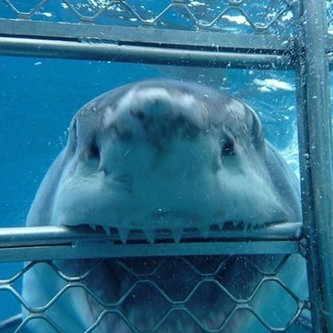 Sometimes, But Not Often, The Sharks Do Just Poke Their Noses In! Photo By: