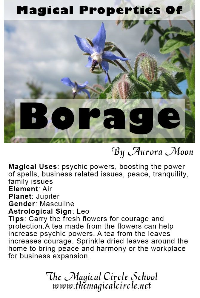 1073 best herbal magic images on pinterest herbal magic herbs and the magical properties of borage created by aurora moon for the magical circle school fandeluxe Image collections