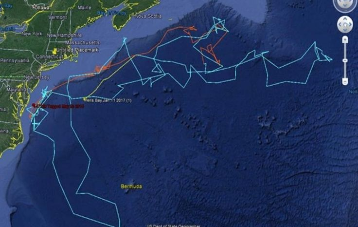 Mako shark travels 13,000 miles in less than two years | Fox News