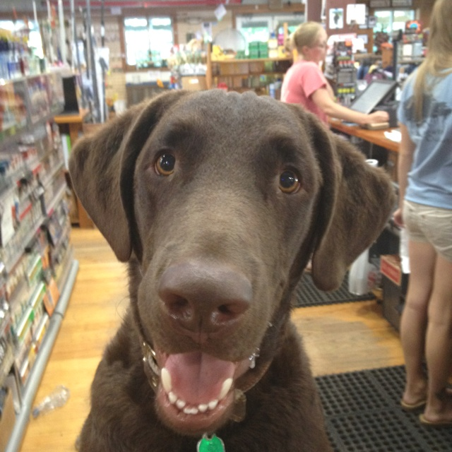 Kona: Wonder Dogs, Happy Dogs