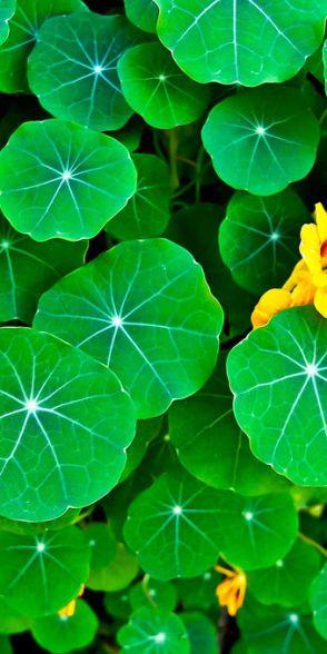 Green Pins For Pinterest @ http://baenk.com/green - green