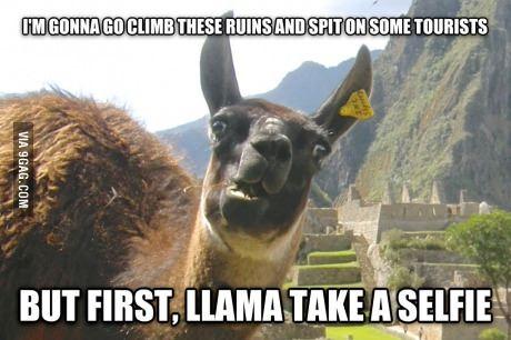 Lamentable Llama loves club music.