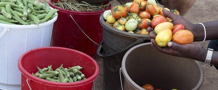 Socialmente Responsables más allá de nuestros cultivos Socially Responsible beyond our own crops #Turkana #Kenia #Kenya