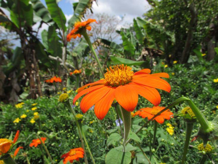 Una flor en el mundo de los quién #paoFotografía