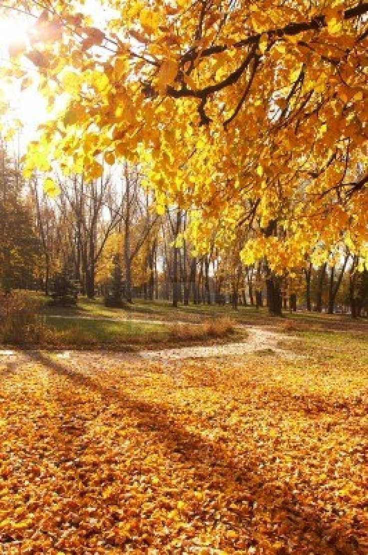 From the book where you might see the beautiful autumn leaves - Autumn