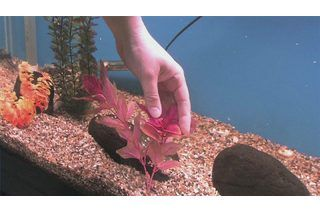 How to Clean Aquarium Rocks and Decorations | eHow