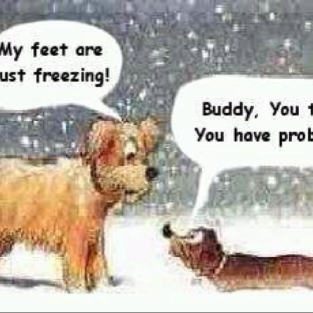 43 best Dachshund Funnies images on Pinterest | Animals, Weenie ...