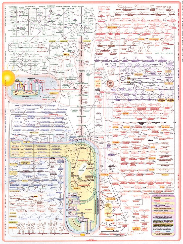 60 best Biochemistry images on Pinterest | Biochemistry, Med school ...