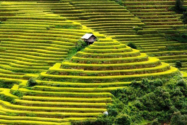 Esta casinha é pelos agricultores que trabalham nos campos de arroz na Mu Kahn Zagi (área rural no nordeste do Vietnã).