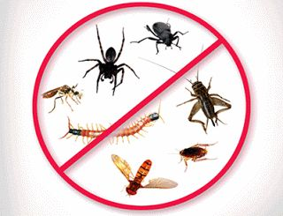 Take the advantage of Pre Purchase Inspections Brisbane: The majority of the people do not pay attention to securing their home against the risk of termites until it becomes a major problem. Over the time, there is the need of the pest control as it helps protect the home against the potential risk.
