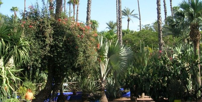 pic from majorelle gardens