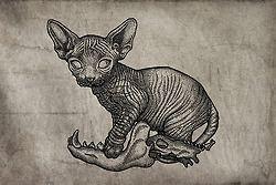 cat art tattoo Sketch bones satan 666 Sphynx Dotwork linework