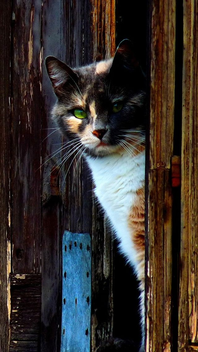 A sly Barn Cat, this tortoise calico is!  Think the barn mice run when they hear Miss BC on the prowl?