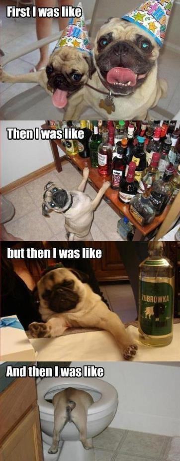 Party party party the pug got wasted