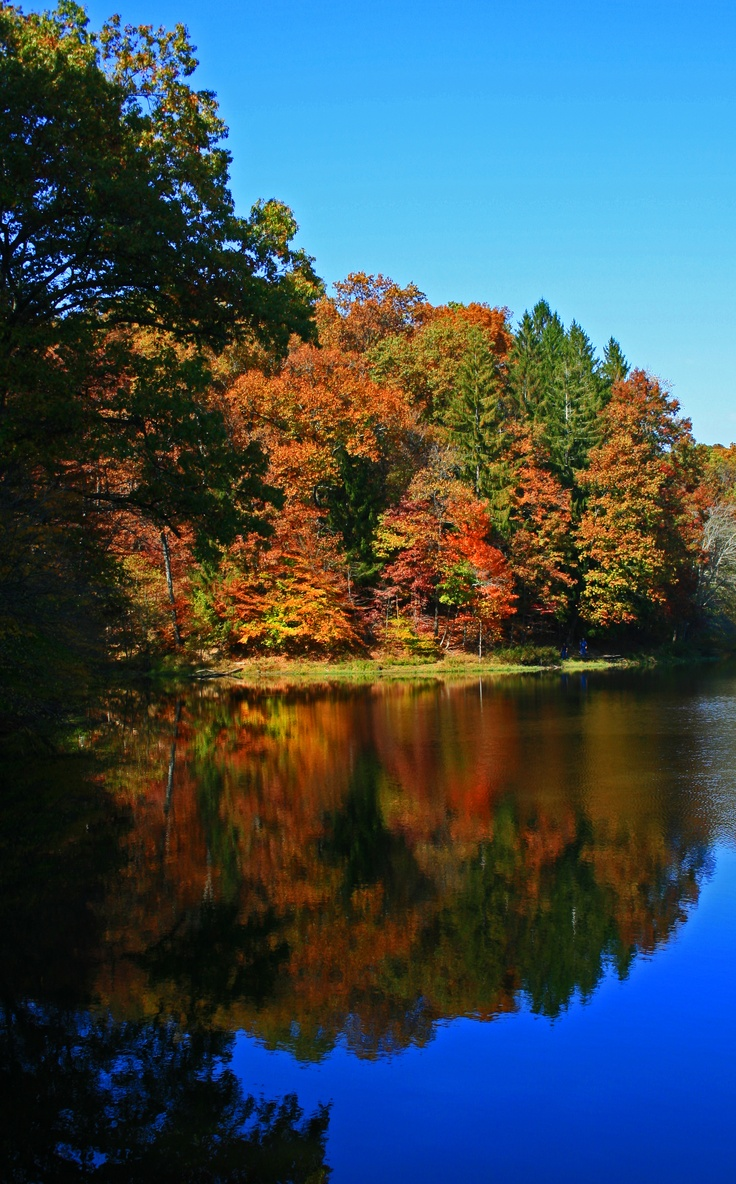 Fall colors in Brown County State Park: Parks Indiana, Camps Places, Brown County States Parks, State Parks, Indiana Parks, Indiana States Parks, Autumn Indiana, Beautiful Reflection, Fall Colors I
