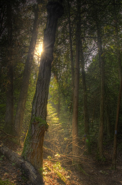 The Enchanted Forest HDR | Flickr - Photo Sharing!