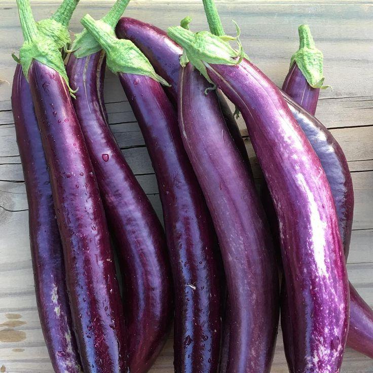 Aubergine, one of my favourite colours! 🍆   #gardeninglife #organic #growyourown #homegrown #aubergine #eggplänt #throwemonthebarbie
